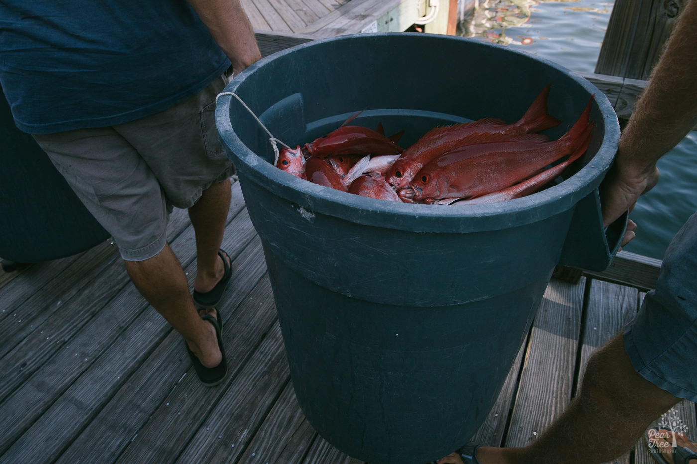 Humongous fishing bucket filled with red snapper being carried down the pier by two men.